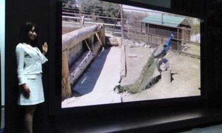 "Panasonic, NHK Show Off 145"" 8K Plasma Television"